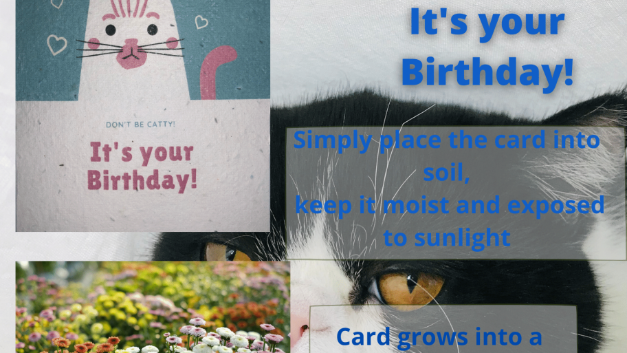 Plantable Gift Card Dont be Catty It's Your Birthday